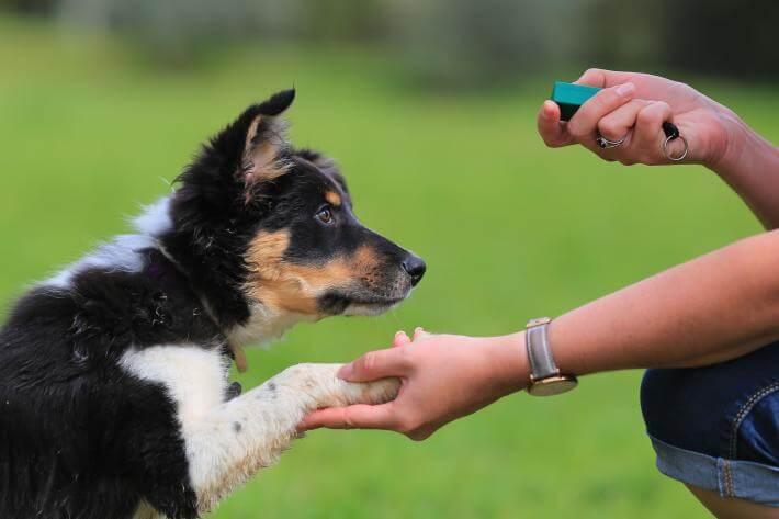 http://www.himalayangorkhaservices.com/wp-content/uploads/2020/06/dog-clicker-training.jpg